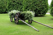 Old Four Wheel Wooden Horse Cart On The Grass