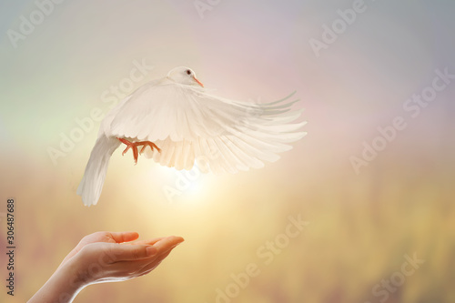 Foto En Lienzo - White Dove in Two Hand woman on vintage pastel background in international day of peace concept