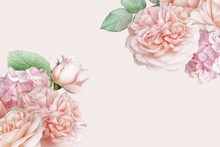 Blush Pink Roses, Tulip, Hydrangea Isolated On Pastel Background. Floral Banner, Header With Copy Space. Natural Flowers Wallpaper Or Greeting Card.