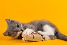 Cute Gray Kitten Playing Funny...