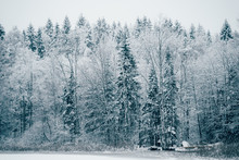 Trees Strewn With Snow In The ...
