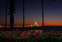 Manhattan Beach Pier Christmas With A Garden Of Red Flowers