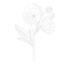 Coloring. Bouquet Of Poppies. Abstraction. Two Black White Flowers And One Bud. Vector.