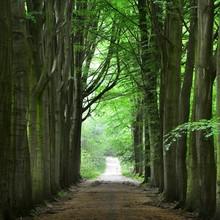 Walkway In A Green Spring Beec...