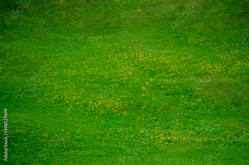 Foto auf AluDibond Grun Fresh green yard with small yellow flowers for background , wallpaper , copy space