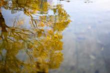 水面に揺れる黄葉