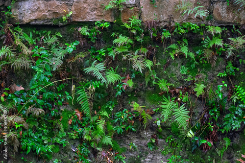 green moss and fern with rock