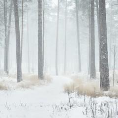FototapetaWinter wonderland in a snowy pine forest