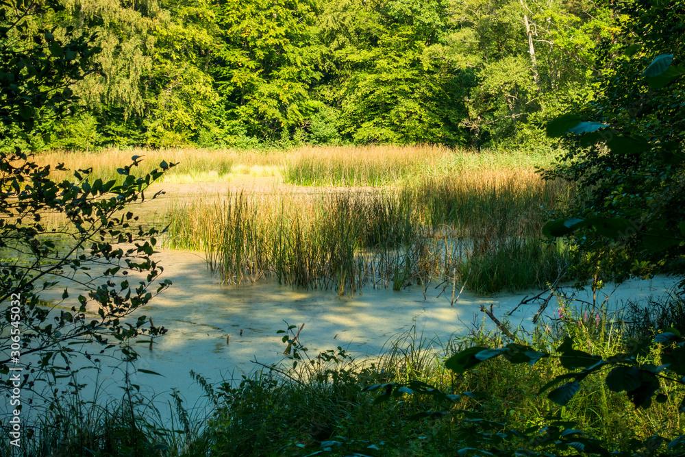 Fototapeta Bagno drzewo mokradła cień trzciny