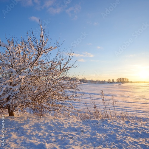 Snowcovered tree and setting winter sun in a snowcovered rural landscape