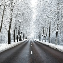 Alley Of Snow Covered Trees An...