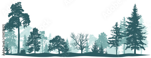 Foto auf AluDibond Blau türkis Forest park tree background. Nature landscape. Green conifers. Pine fir New Year tree. Vector silhouette
