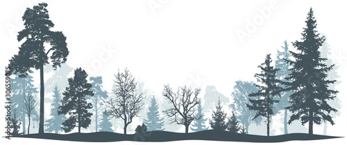 Obraz Winter forest vector illustration. Isolated trees silhouette - fototapety do salonu