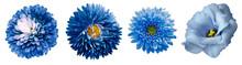 Set Blue Flowers.  Blue Chrysa...