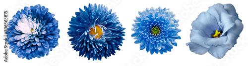 set blue flowers Canvas Print
