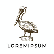 Hand Drawn Pelican For Logo Template, Vintage, Isolated White Background.