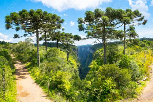Photo Beautiful araucarias trees in  Itaimbezinho Canyon - Cambara do Sul/Rio grande d