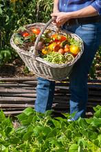 Au Potager - Jardinier Tenant Un Panier De Légumes