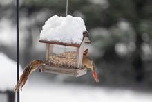 Chipmunk Leaping