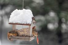 Bird Feeder In The Winter