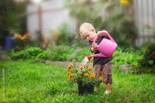Fototapeta Child boy watering flowers in garden from can obraz