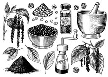 Black Pepper Set In Vintage Style. Mortar And Pestle, Allspice Or Peppercorn, Mill And Dried Seeds, A Bunch Of Spices. Herbal Seasoning For Cooking. Engraved Hand Drawn Vector Sketch For Background