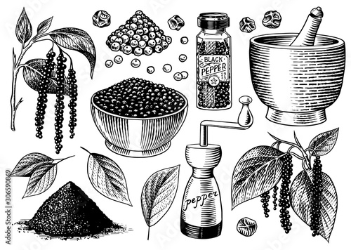 Fototapeta Black pepper set in Vintage style. Mortar and pestle, Allspice or peppercorn, Mill and dried seeds, a bunch of spices. Herbal seasoning for cooking. Engraved hand drawn vector sketch for background obraz