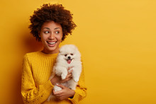 Horizontal Shot Of Happy Afro American Hostess Poses With Cute Spitz Puppy With Stucked Out Tongue, Looks Aside And Smiles, Have Nice Walk Together, Isolated On Yellow Background, Blank Space