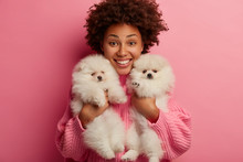 I Love My Dogs. Cheerful Pleasant Looking Curly Woman Holds Two Pedigree Puppies, Smiles Broadly, Poses Indoor, Works As Volunteer, Finds Shelter For Stray Animals, Isolated On Pink Studio Wall