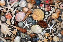 Large Collection Of Seashells,...