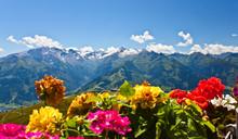 Blumen Auf Der Schmittenhöhe In Zell Am See
