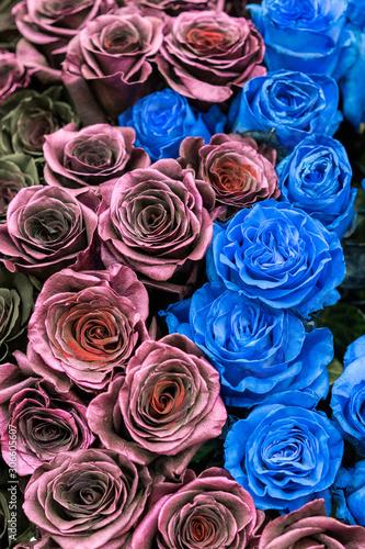 Papiers peints Cactus Bouquet of black, blue and burgundy roses. vertical photo