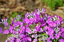 背景ぼかして、紫色の...