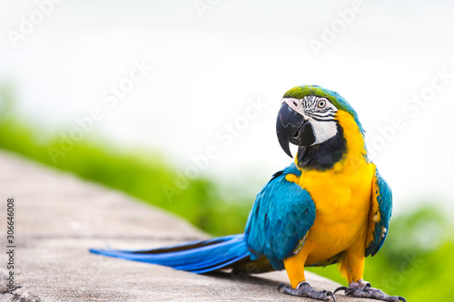 Blue macaw parrot Wallpaper Mural