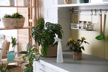 Green Potted Plants And Spray ...