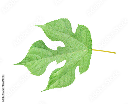 Green leaves with detail vein patterns and serrated curve edge isolated on white Canvas-taulu