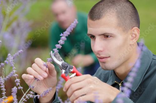 close up of a man cutting lavender Canvas Print