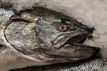 A Close Up Of A Salmon For Sal...