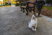Beautiful Stray Cat In A City Park