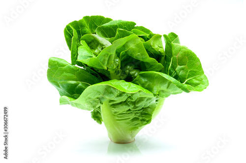Fototapeta Fresh green Butterhead Lettuce isolated on white background. obraz