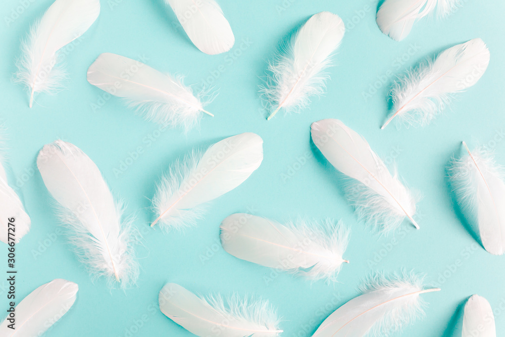 White feather texture on a blue background. Feather background. Flat lay, top view