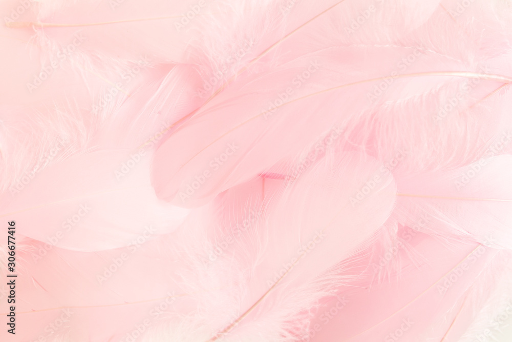 Pink feathers textured background. Feather background. Flat lay, top view