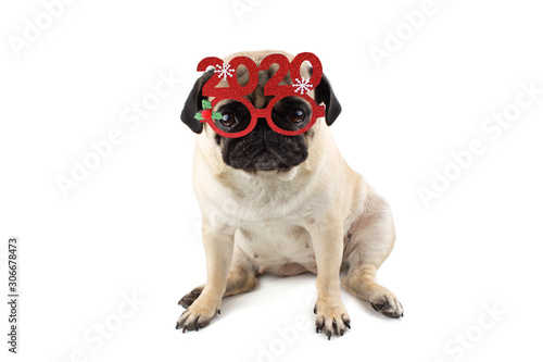 Fotografiet  Sad innocent pug dog with Red Christmas glasses with numbers 2020