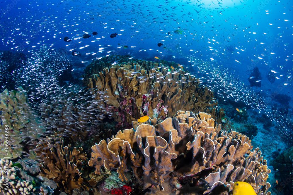 Fototapeta Beautiful tropical coral reef at Thailand's Similan Islands in the Andaman Sea