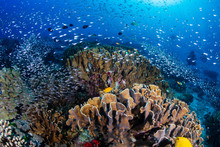 Beautiful Tropical Coral Reef ...