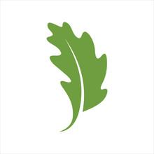 Leaf Design Icon Logo Vector