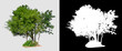 Leinwanddruck Bild - isolated tree on transperrent picture background with clipping path
