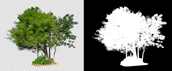 isolated tree on transperrent picture background with clipping path