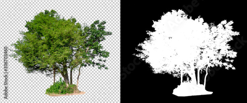 Photo isolated tree on transperrent picture background with clipping path
