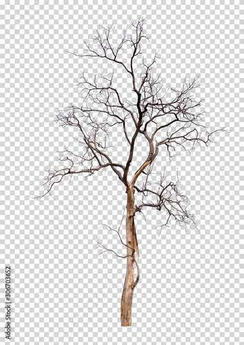 Photo isolated death tree on transperrent picture background